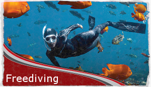 Home-freediving_border